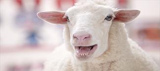 "TARGET  ""Zootopia Sheep"""